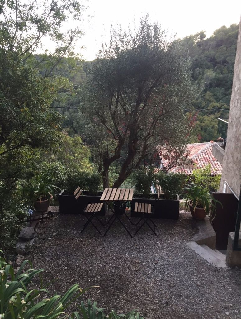 Terrace with tables and chairs for breakfast, olive and bamboo trees